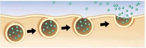 Как устроены мембраны клетки