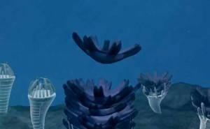 Жизненный цикл медузы