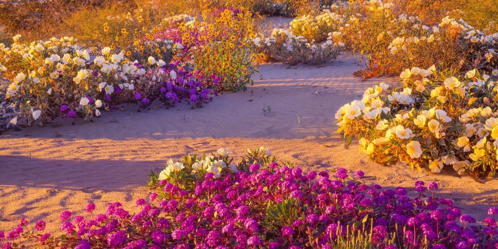 Растения пустыни список