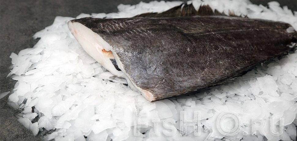 Промысловая рыба северных морей