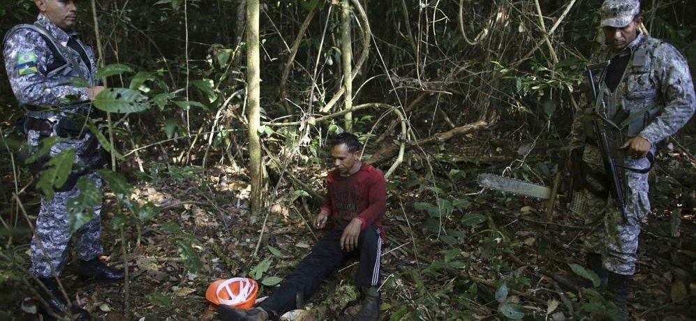 Бразильский лес