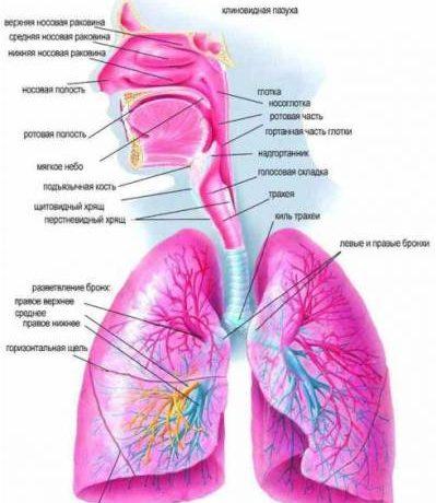 Зачем человек дышит