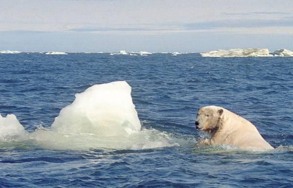 Моря атлантического океана омывающие территорию россии