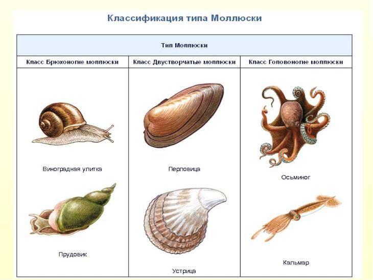 Животные водного мира