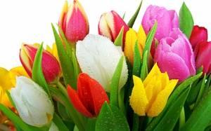 Каких цветов бывает