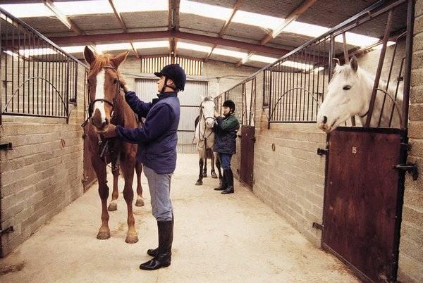 Лошадь это млекопитающее или нет