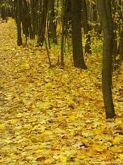 Сочинение про осень короткое