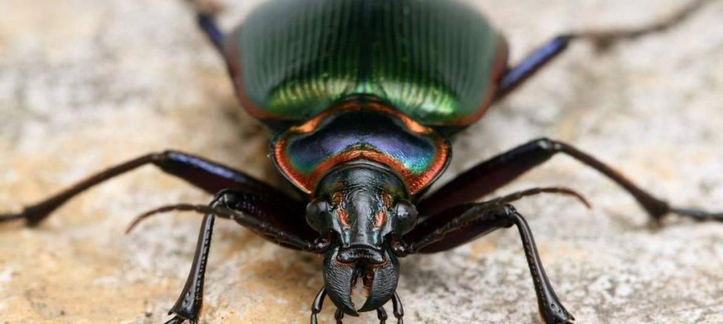 Сколько пар конечностей у насекомых