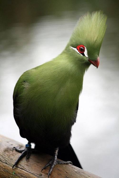 Птицы список животных