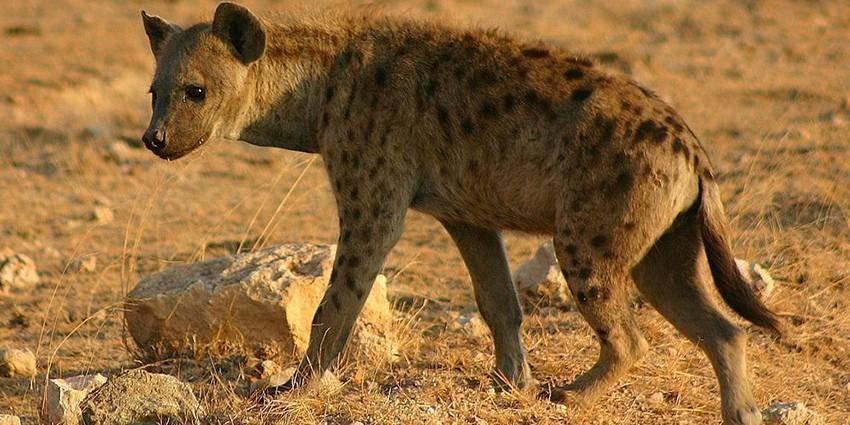 Животные пустыни картинки