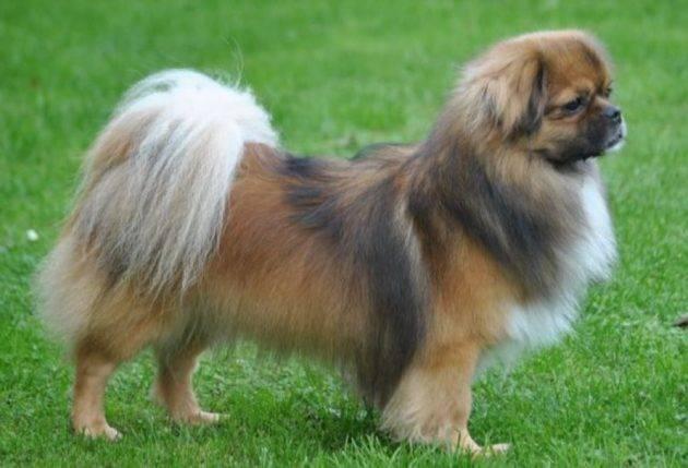 Какая порода собак выведена для охоты